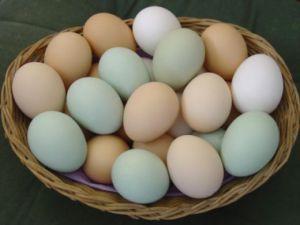 Free_Ranged_Pasture_Raised_Eggs